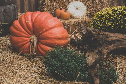 Free stock photo of autumn decoration, background image, backgrounds, halloween