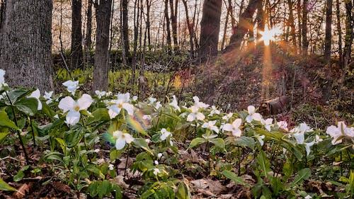 Ilmainen kuvapankkikuva tunnisteilla auringon häikäisy, kasvikunta, kukat, kukinta