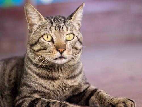 Fotobanka sbezplatnými fotkami na tému mačka, príroda, zviera