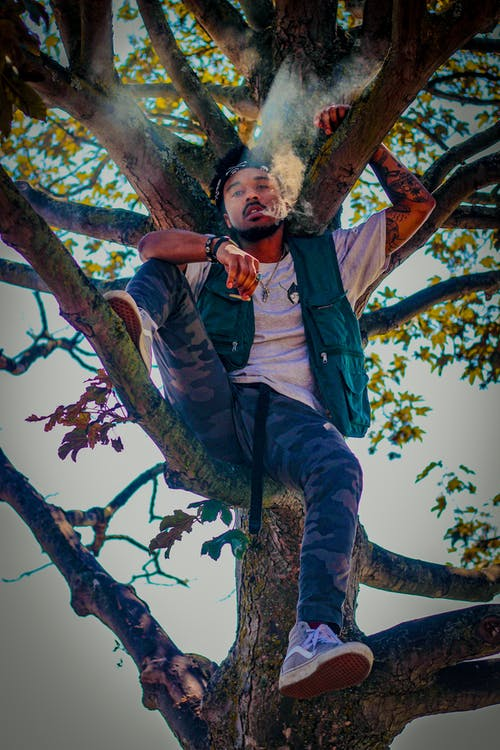 Immagine gratuita di albero, canapa, lexscope