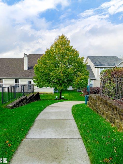Бесплатное стоковое фото с дерево, листопад, окрестности, осенние цвета