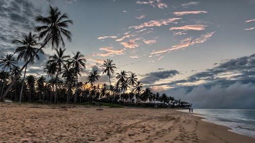 Δωρεάν στοκ φωτογραφιών με άμμος, δέντρα, ειδυλλιακός, ελεύθερος χρόνος
