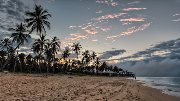 Palm Trees Beside Beach Shore during Sunset