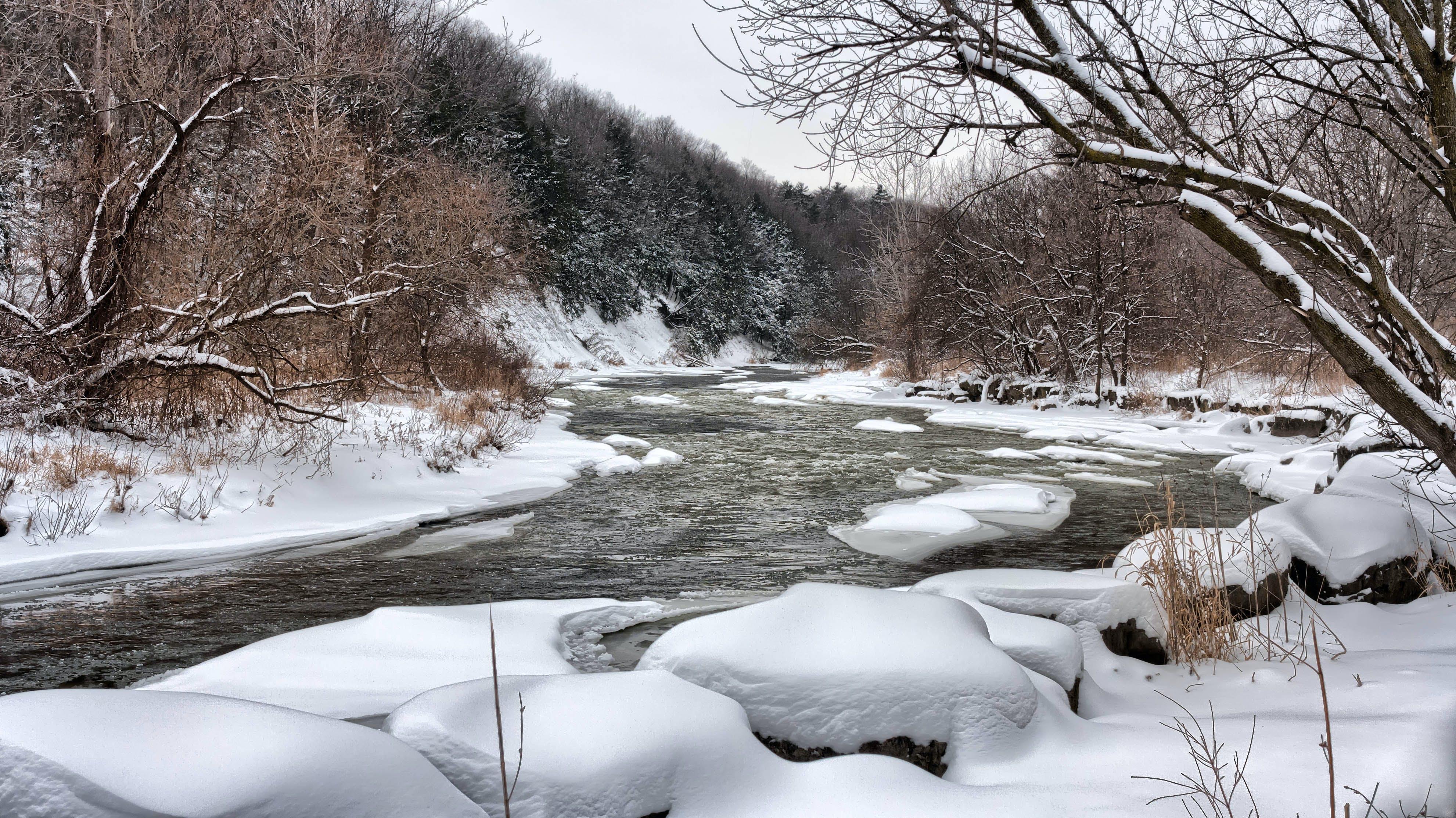 forkjølelse, kald, skog