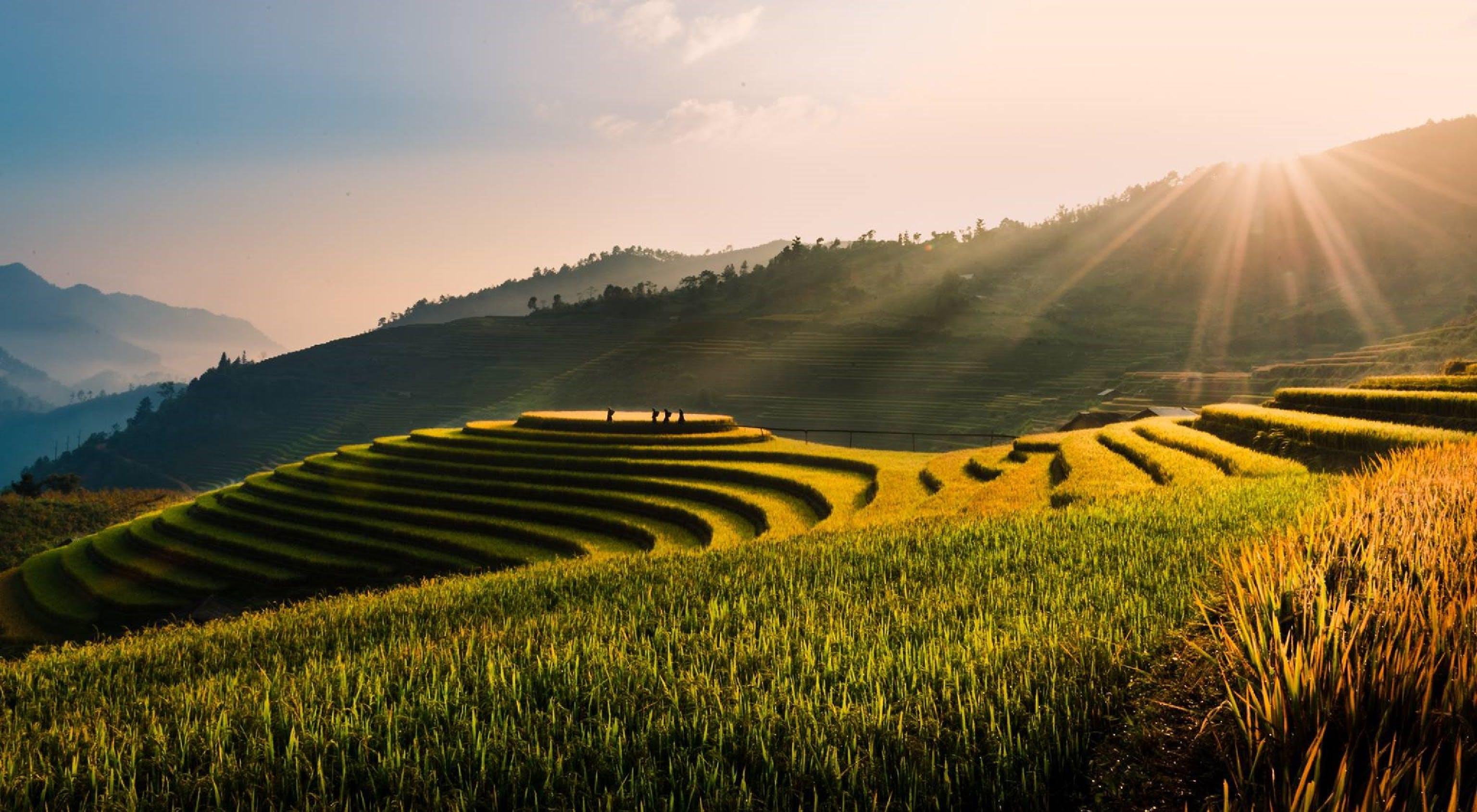 Free stock photo of đồi núi, bình yên, cánh đồng, com