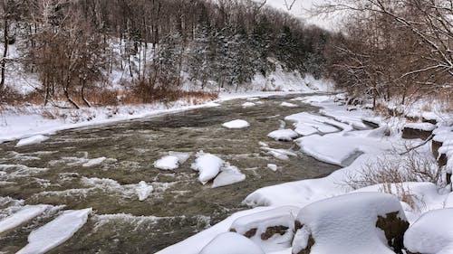 冬季, 冷, 天氣, 森林 的 免費圖庫相片