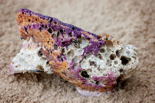 Free stock photo of sea shells, seashells