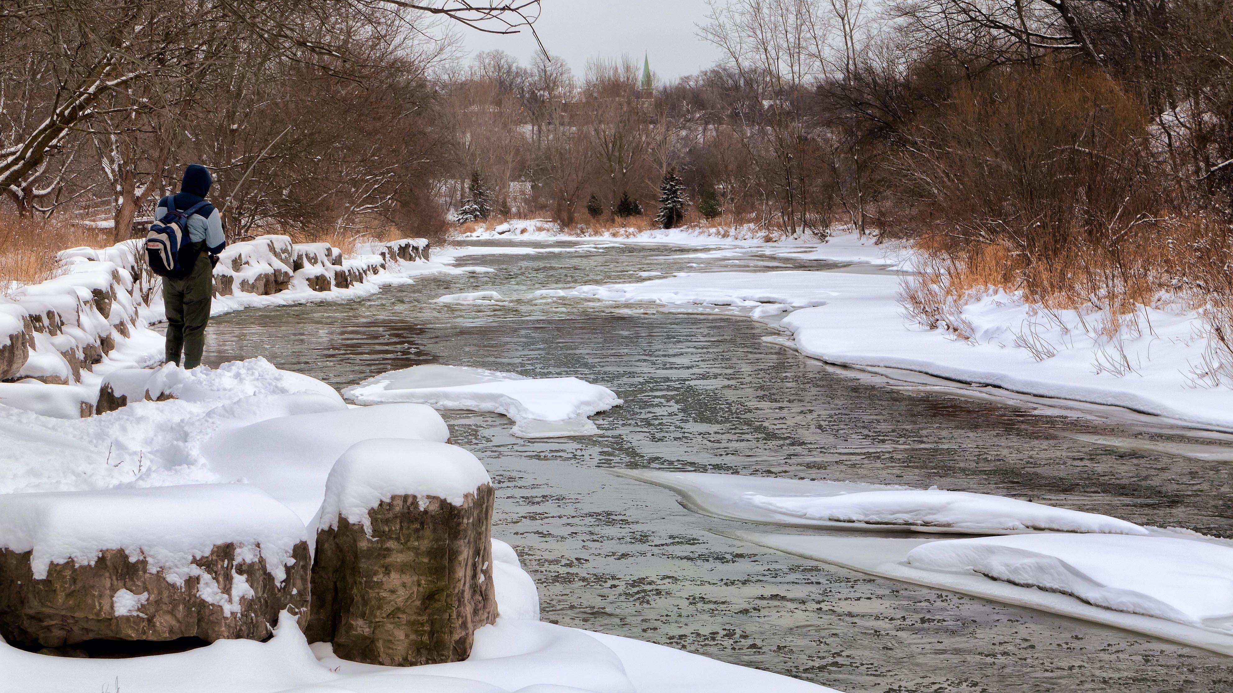 Základová fotografie zdarma na téma denní světlo, dřevo, krajina, led