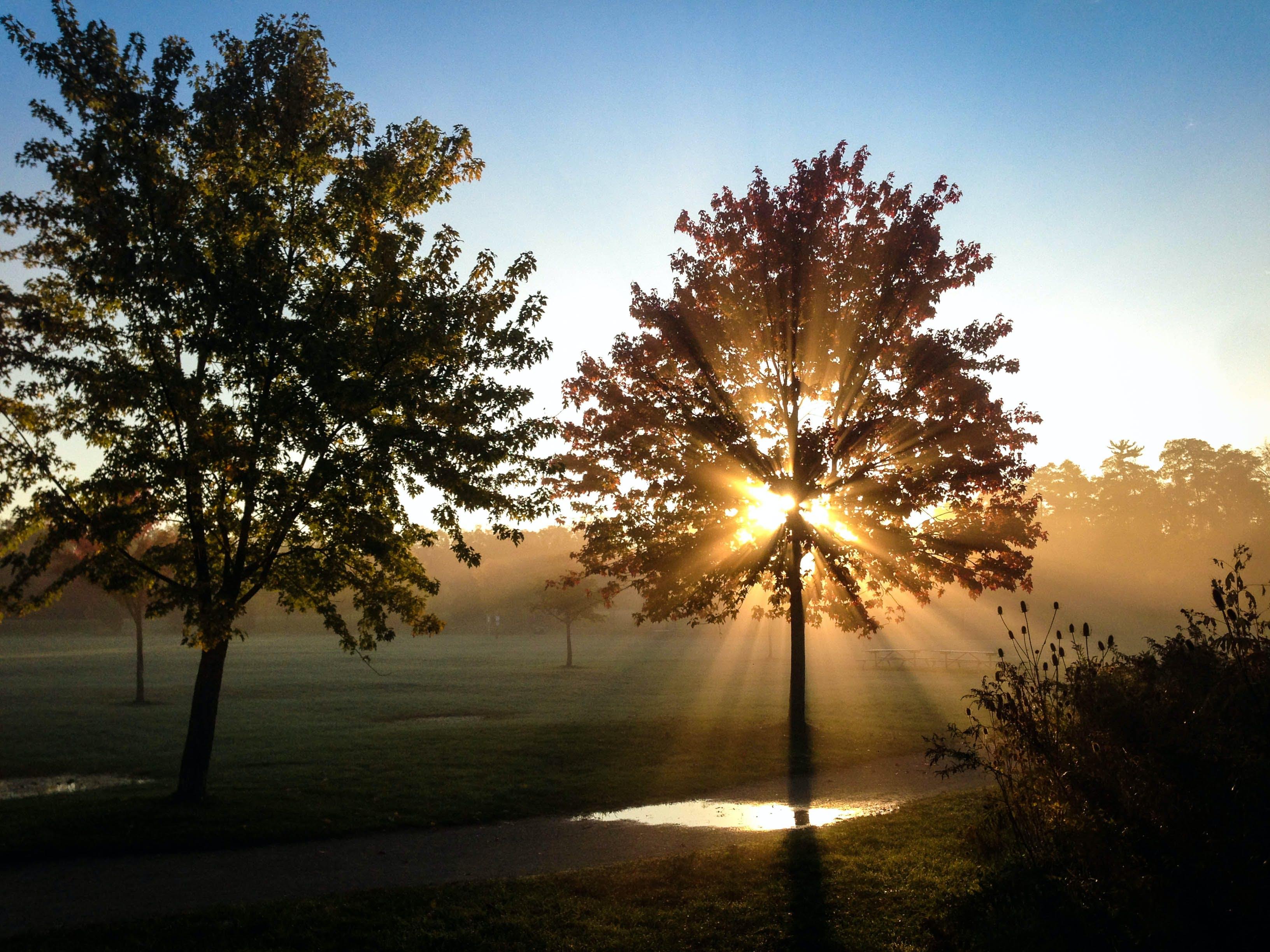 Gratis stockfoto met bomen, dageraad, landschap, mist