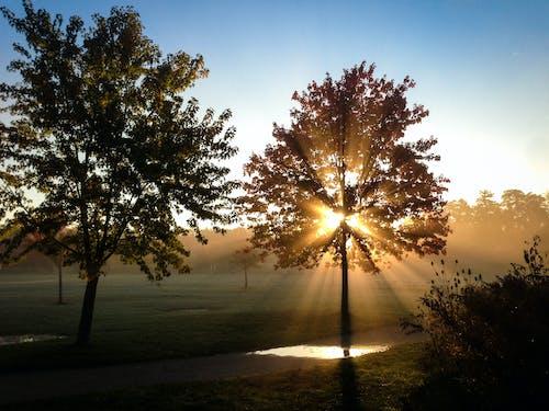 Photos gratuites de arbres, aube, brouillard, brume