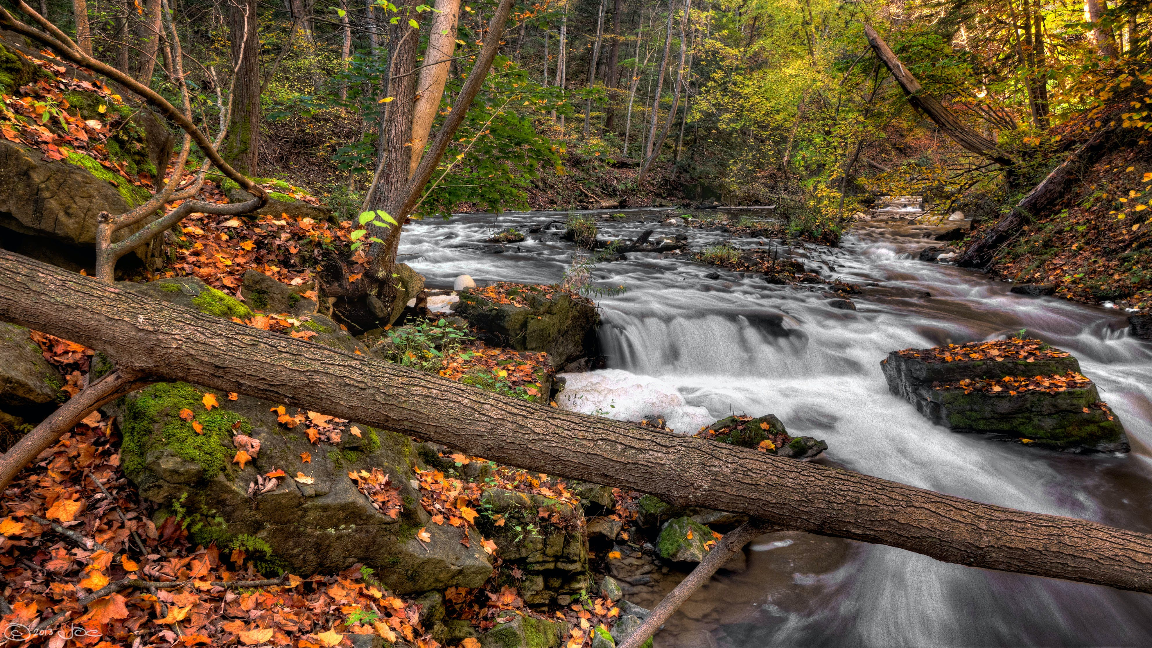 Photo of River in Forest