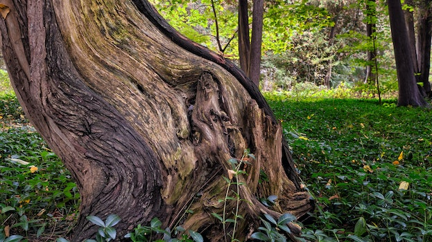 Tree Trunk Surrounded by Green Grass