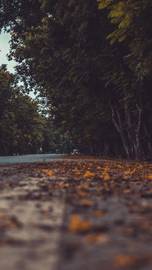 Kostenloses Stock Foto zu auto, bäume, fahrzeug, gelb