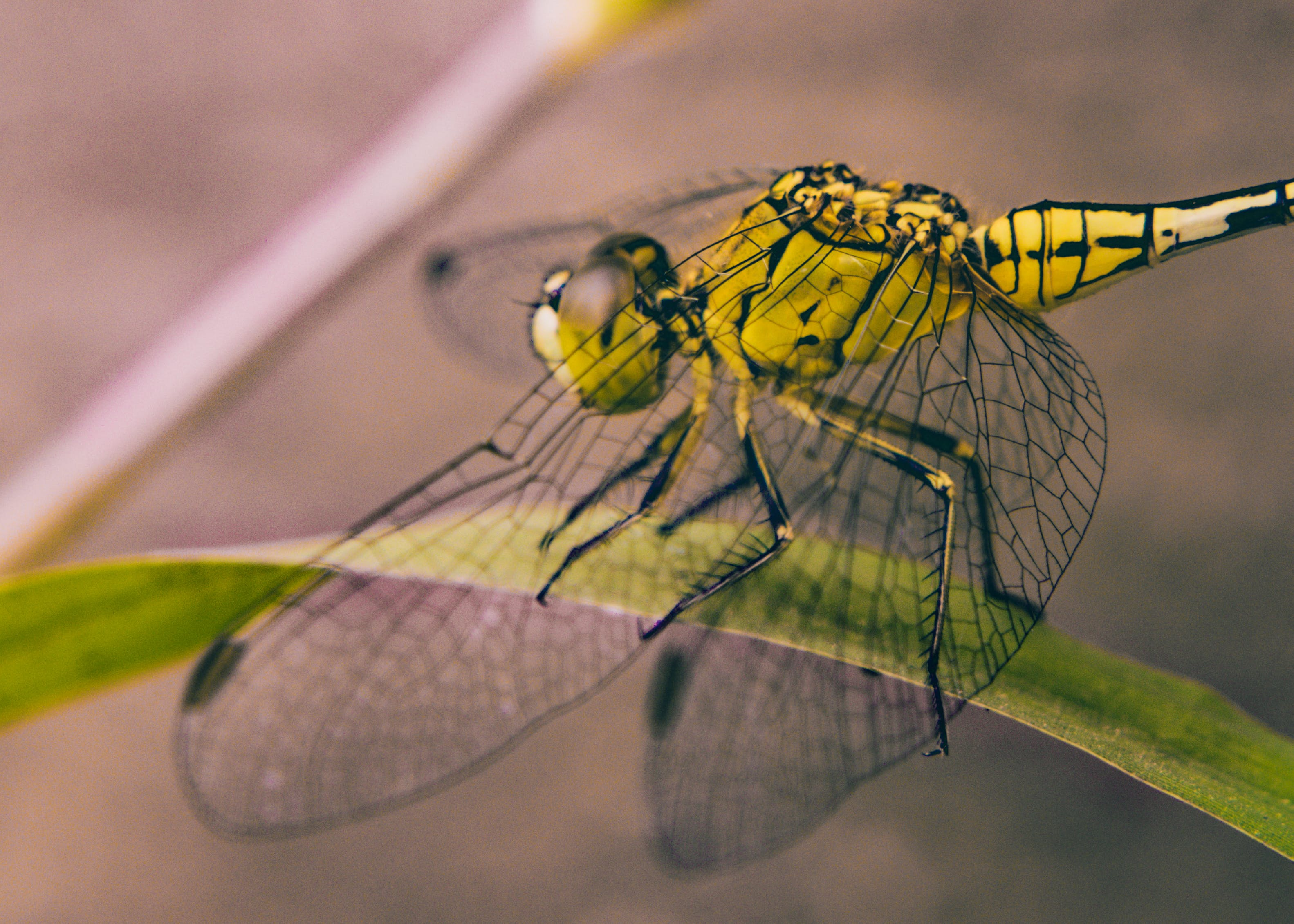 Close-up Photography of Dragonfly