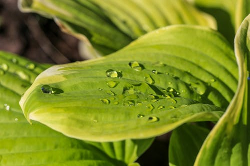 Free stock photo of dew, dewdrop, green leaves