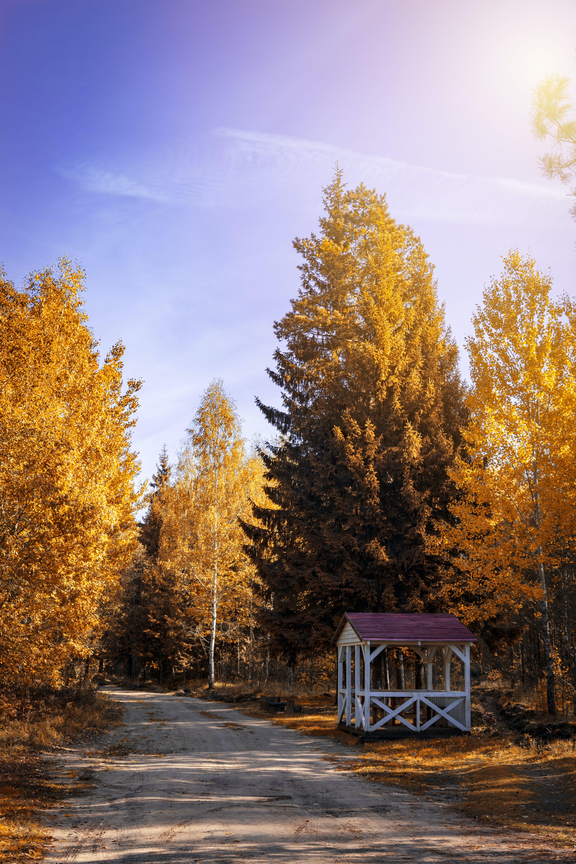 Kostenloses Stock Foto zu straße, natur, bäume, blätter