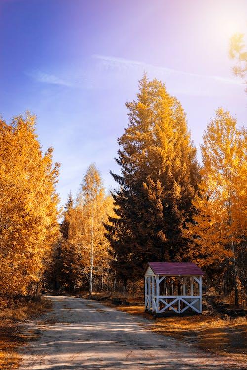 คลังภาพถ่ายฟรี ของ กลางวัน, ต้นไม้, ถนน, ทำด้วยไม้