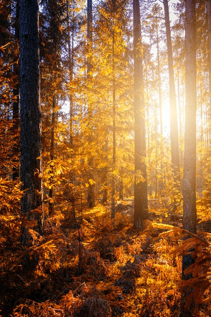 Forest during sunset