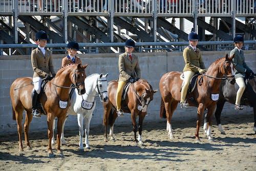Ảnh lưu trữ miễn phí về #sydney #horse #femalerider #race #royaleastershow