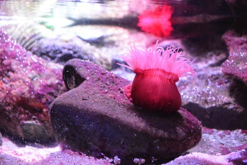 Ảnh lưu trữ miễn phí về #sydneyaquarium #seacreature #pink #coral