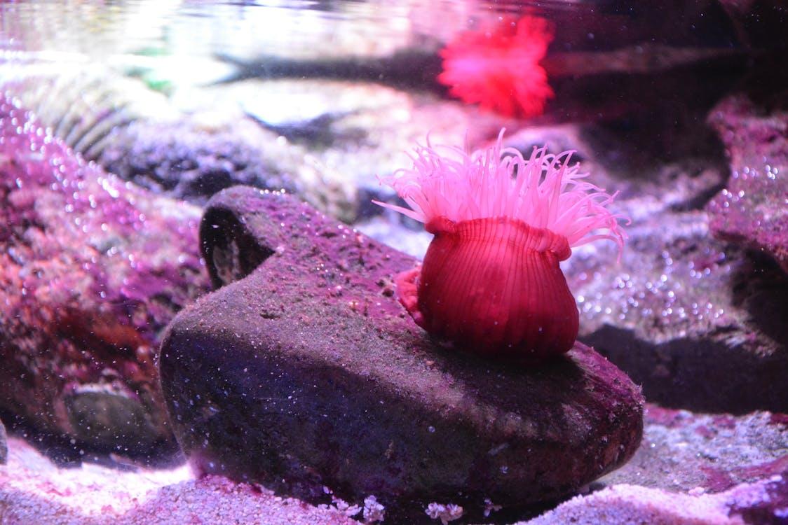 #sydneyaquarium #seacreature #pink #coral