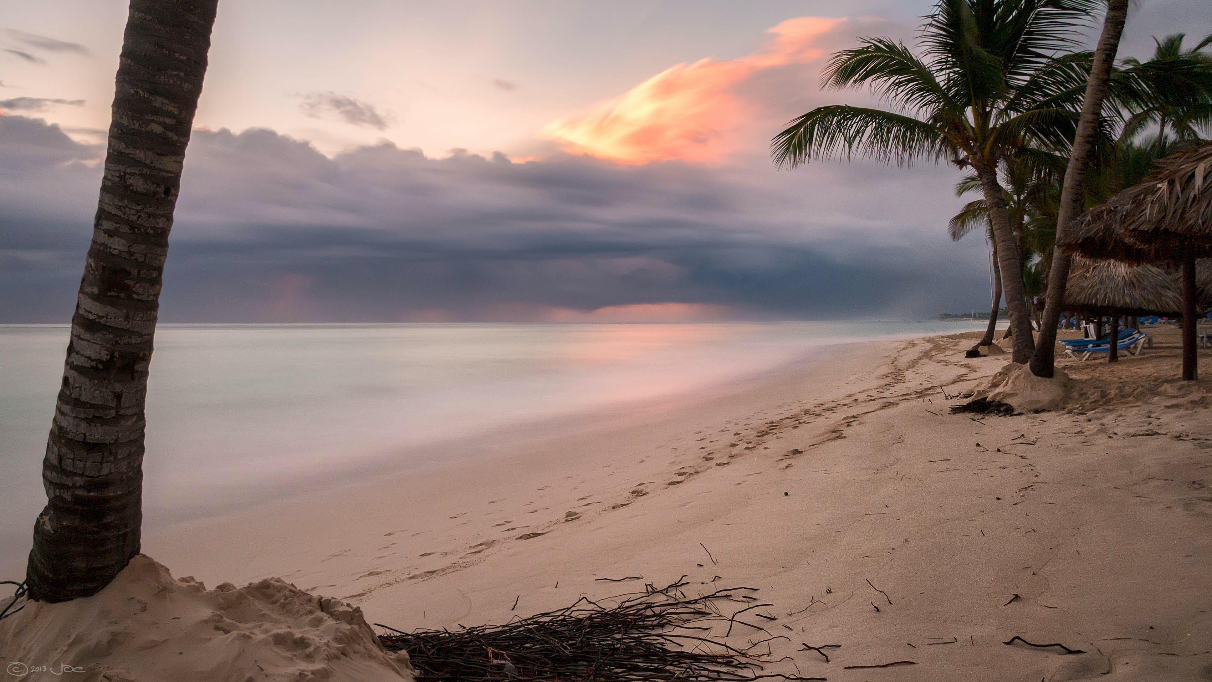 Palm Tree on Shore Near Body of Water Under Orange Sunset
