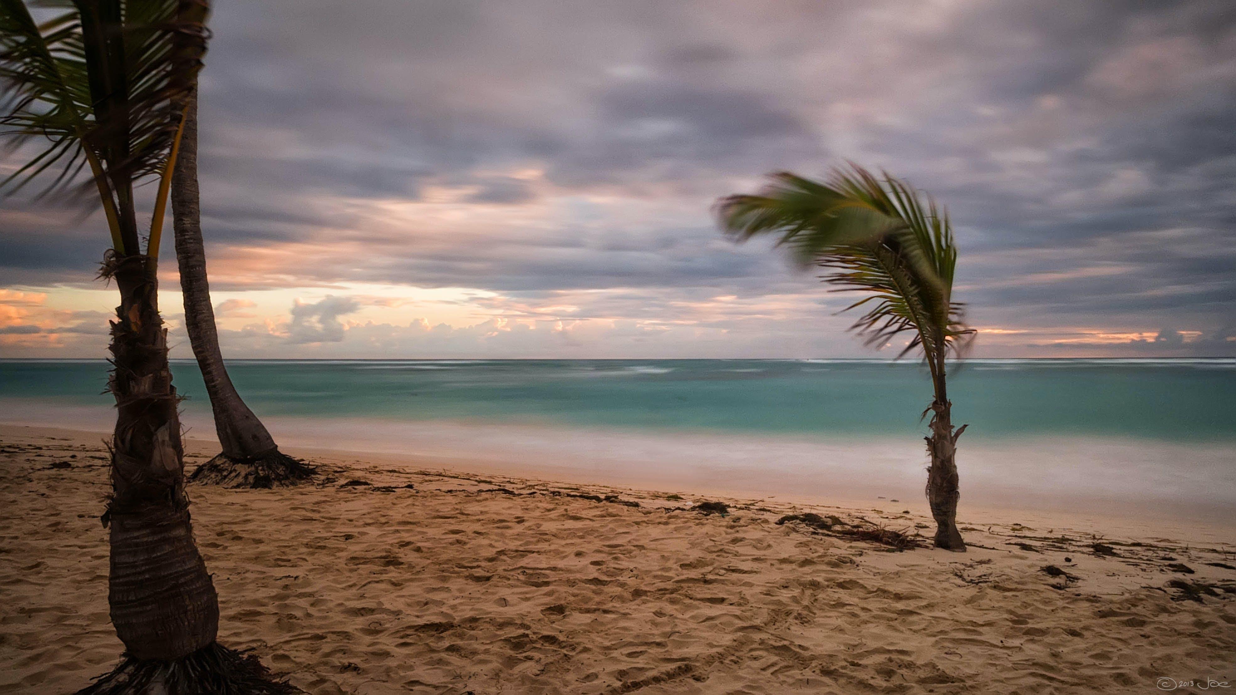 Green Palm Tree Near Body of Water