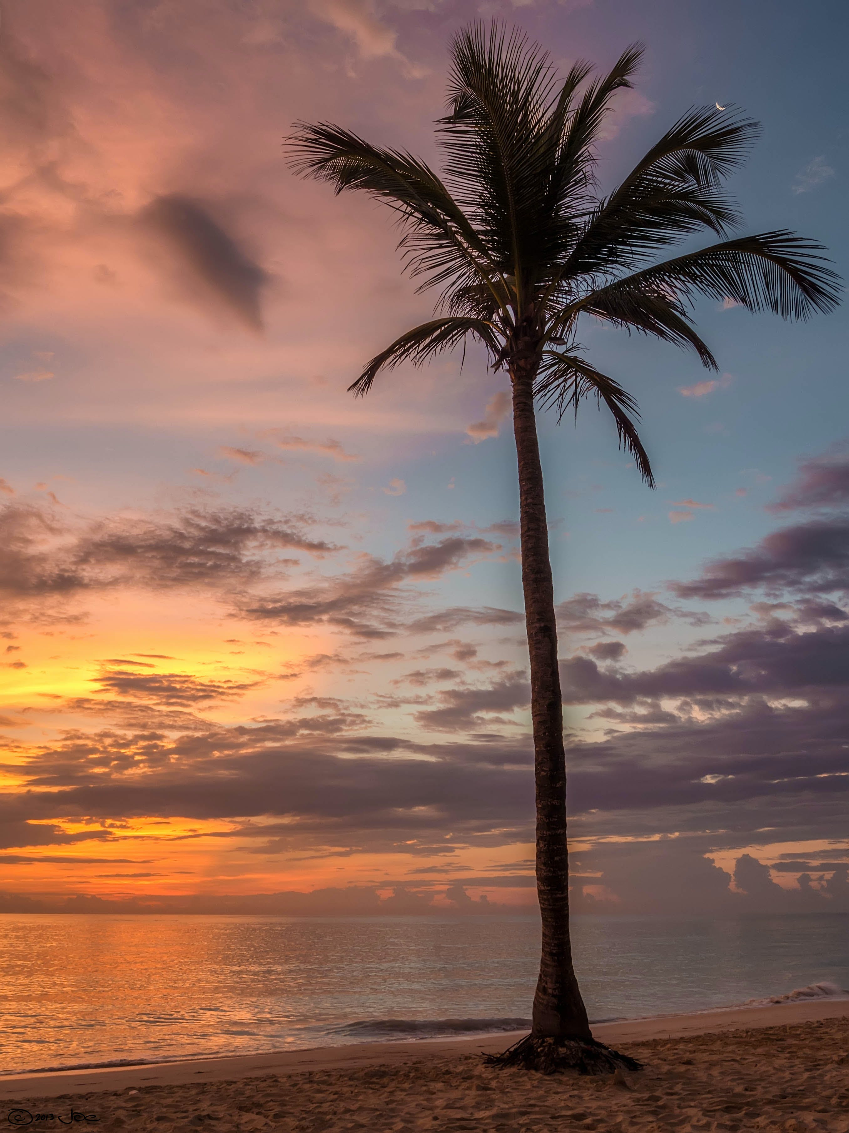 Palm Tree Beside the Sea Shore during Sunset
