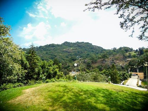 Безкоштовне стокове фото на тему «gyan sarovar, mount abu, гора, дерево»