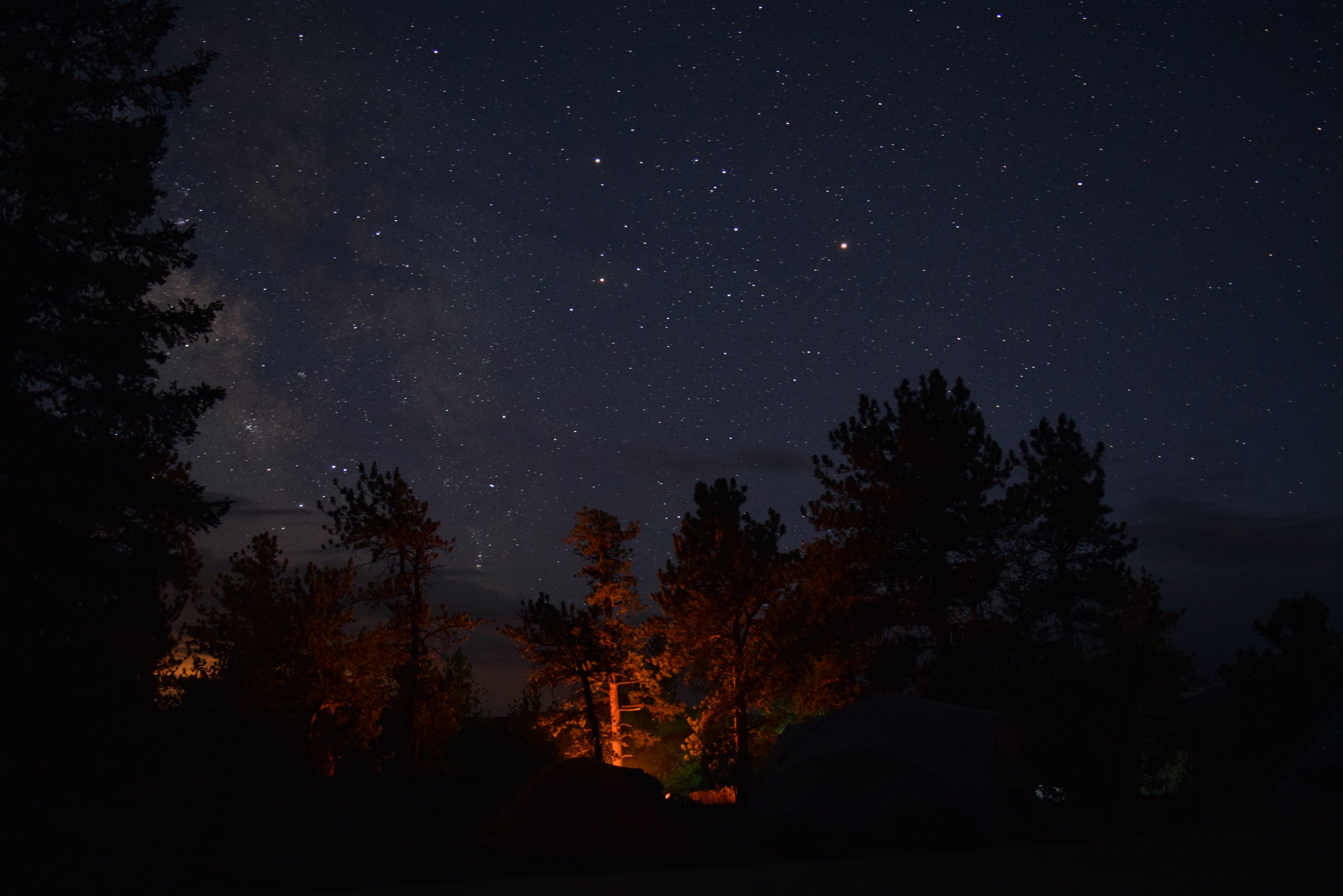 Kostenloses Stock Foto zu abend, astronomie, bäume, dämmerung