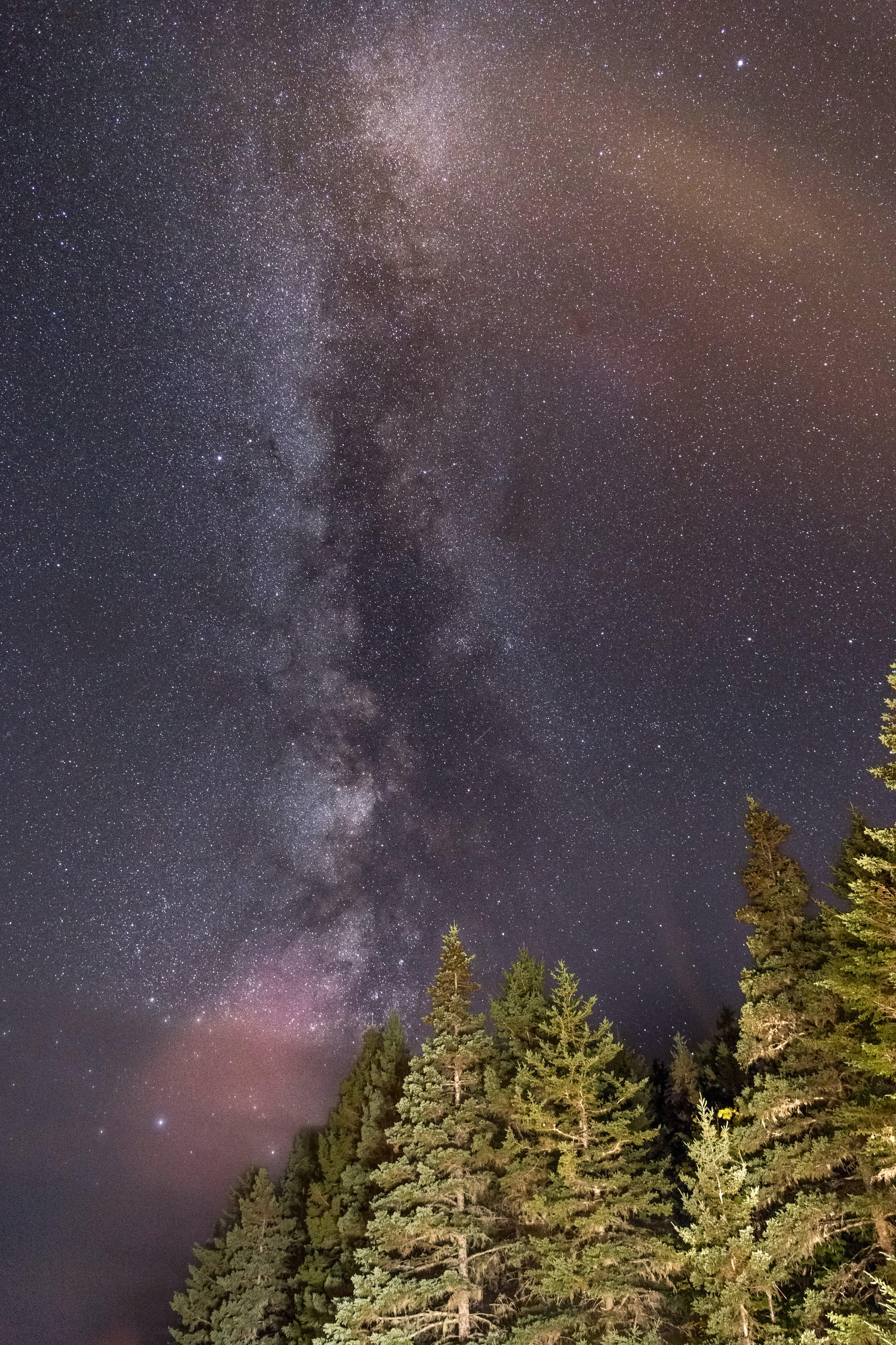 Darmowe zdjęcie z galerii z astronomia, droga mleczna, drzewa, drzewa iglaste