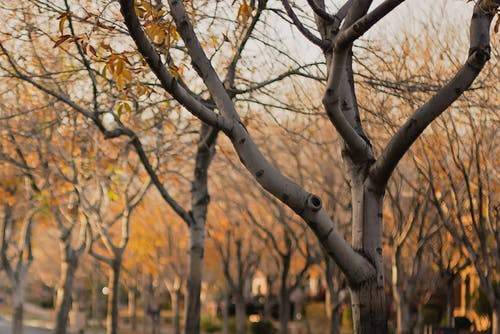 Free stock photo of branches, trees, yellow
