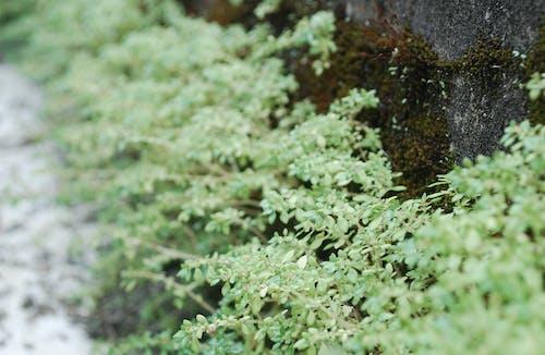 Kostnadsfri bild av grönt löv