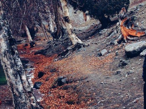 Free stock photo of beautiful, discover, frozen river, hunza