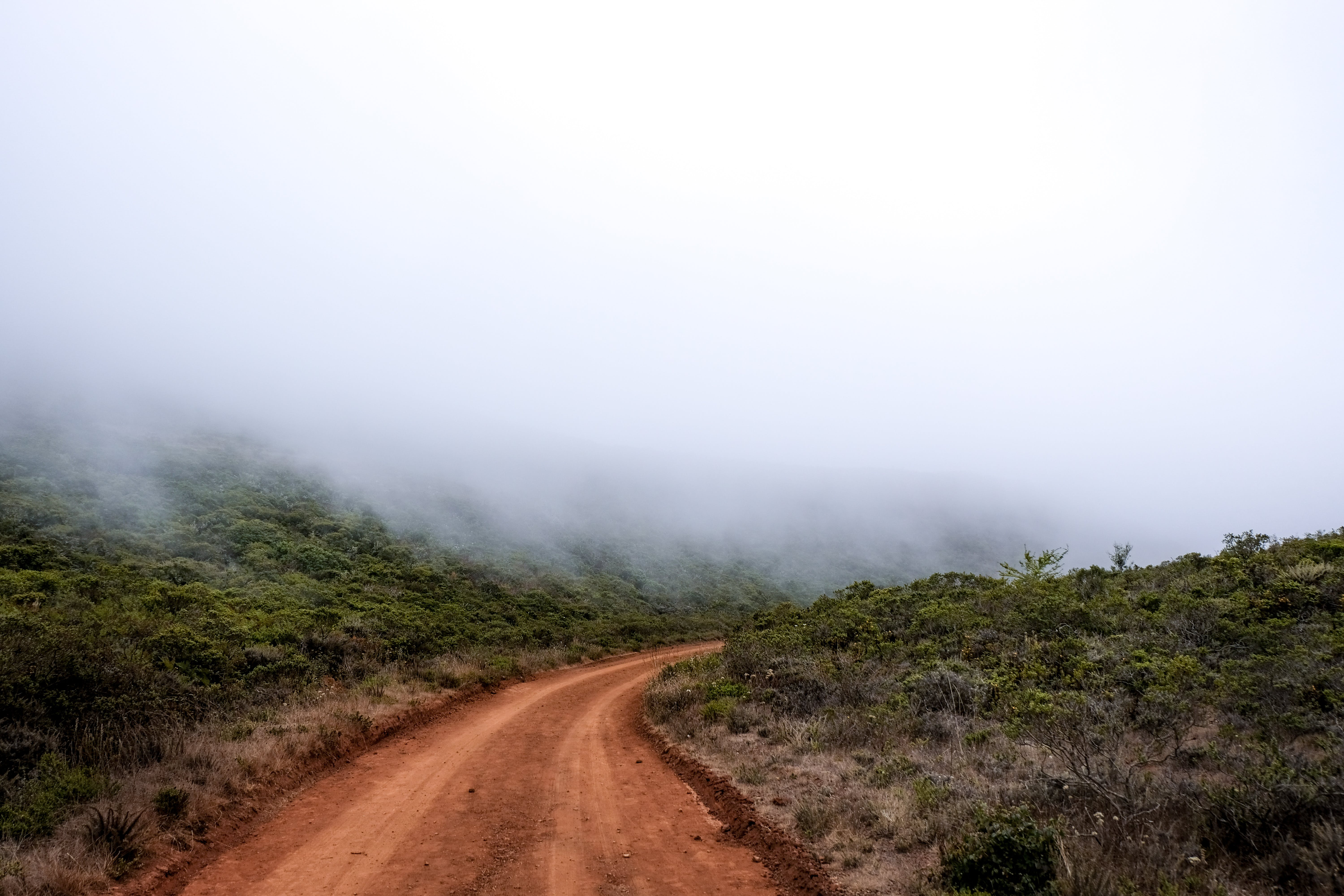 Dirt Road Between Grass Field Covered With Fogs