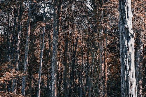 Základová fotografie zdarma na téma oranžové dřevo, oranžový les