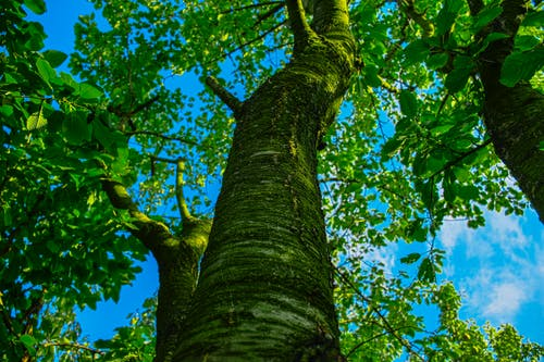 Základová fotografie zdarma na téma zelený strom