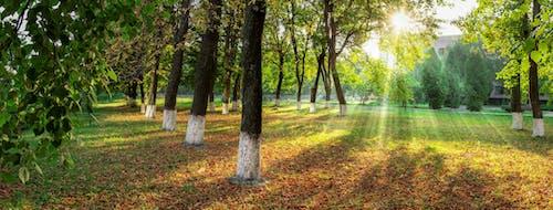 公園的全景 的 免費圖庫相片