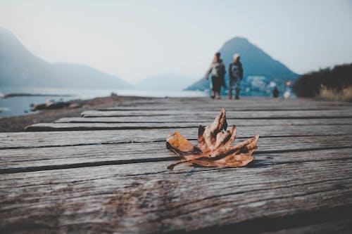 Fotobanka sbezplatnými fotkami na tému cviky plank, detailný záber, drevená doska, javorový list