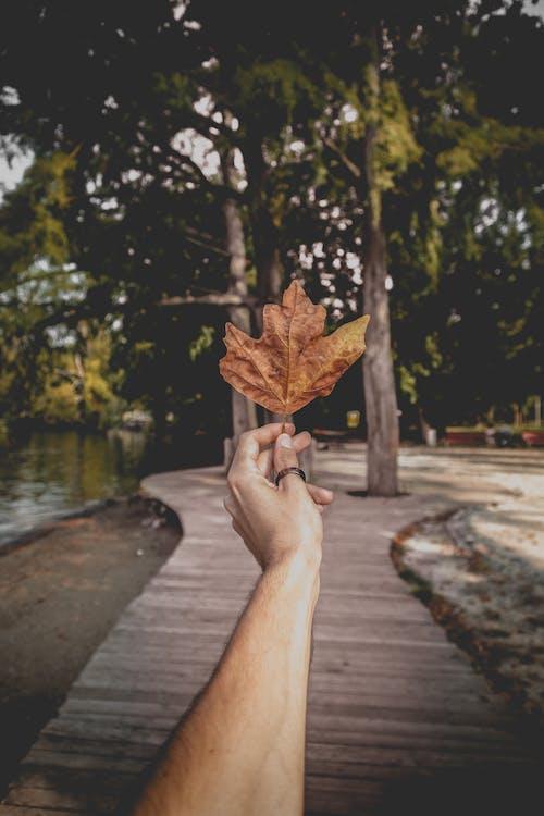 Gratis arkivbilde med blad, dagslys, hånd, holde