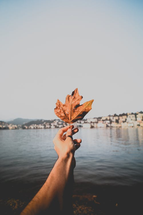 Person Holding Dried Leaf over Body of Water