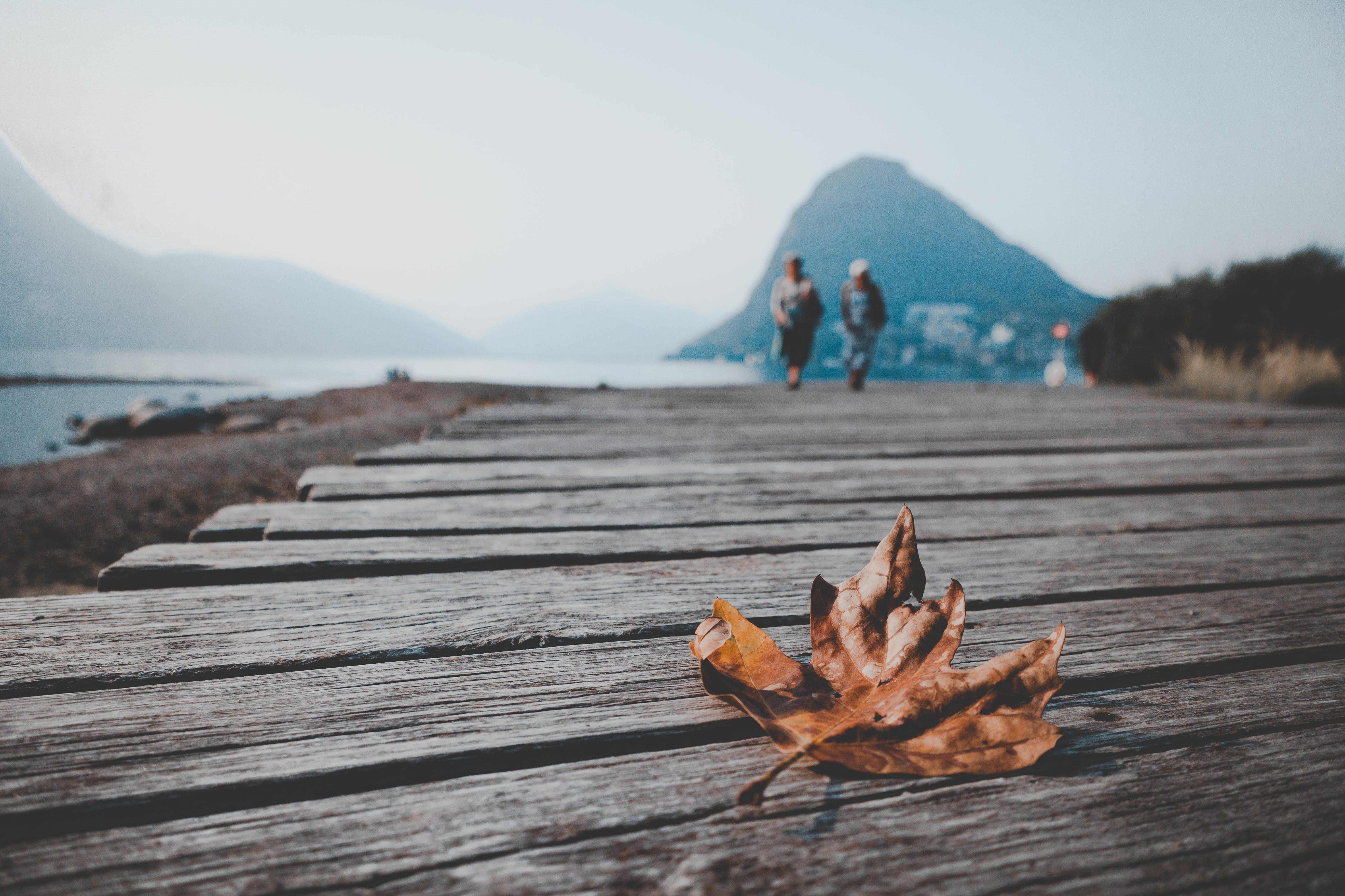 Brown Autumn Leaf on Wooden Dock