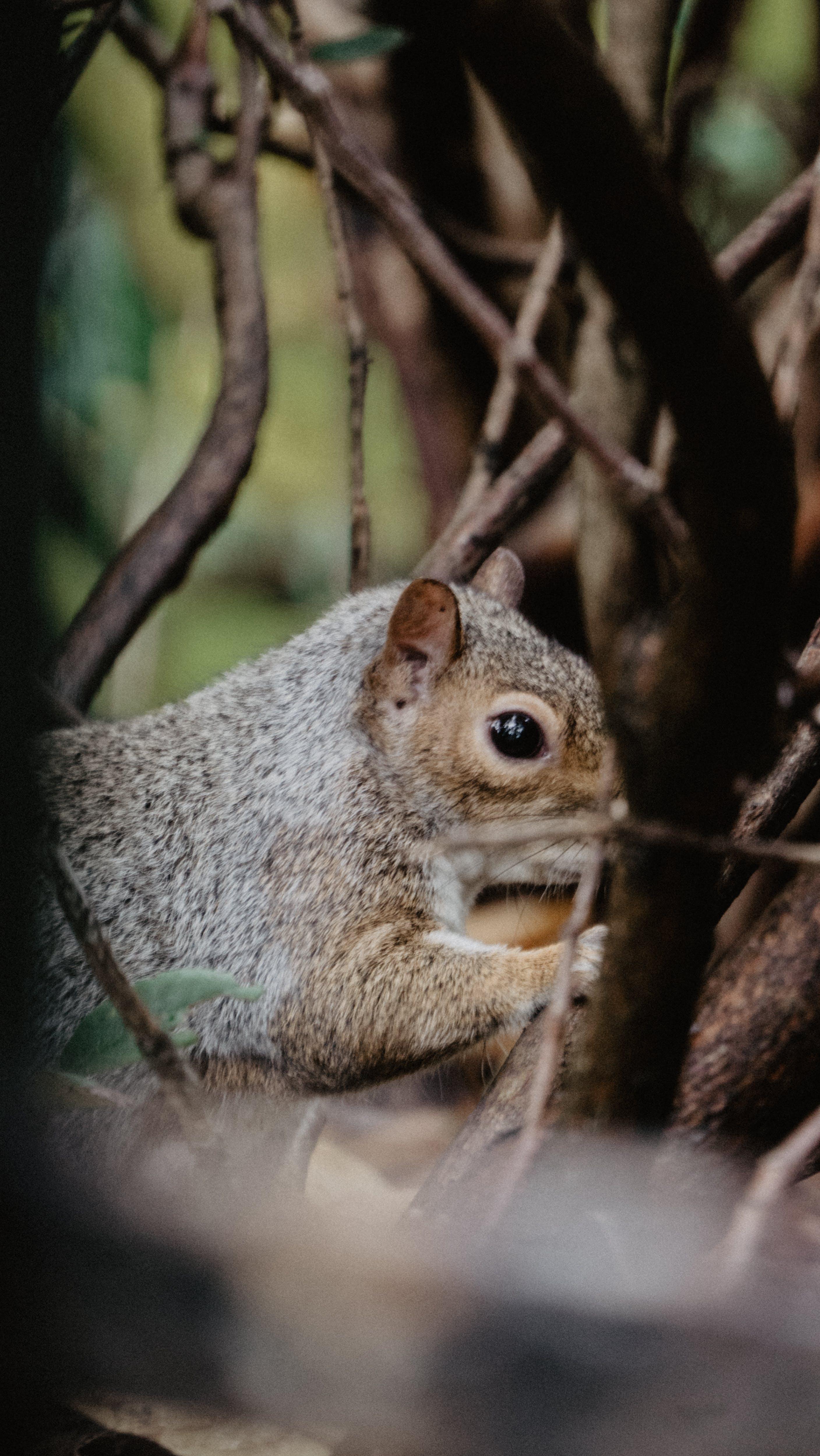 Free stock photo of animals, forest, squirrel, wild animals