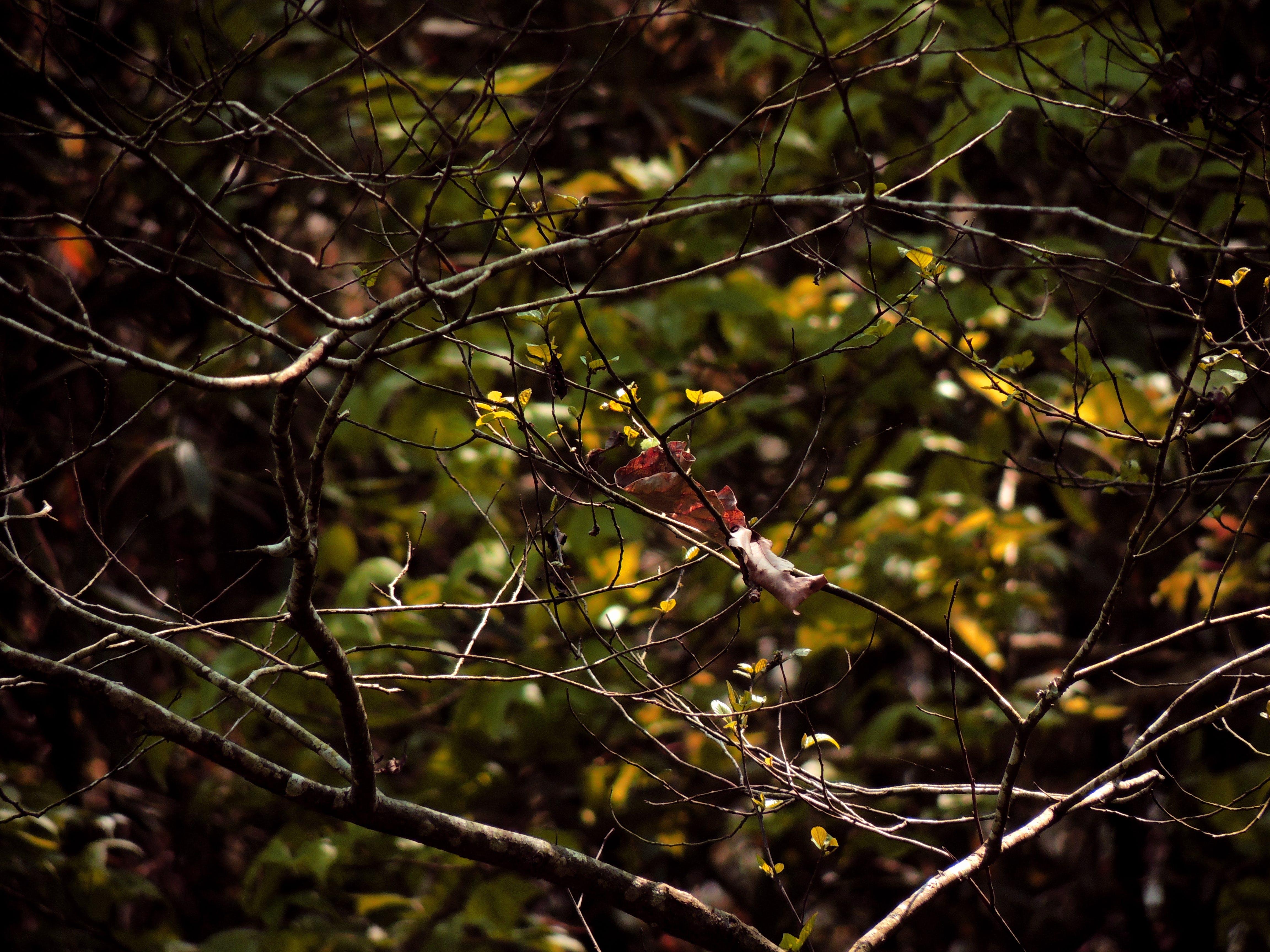 คลังภาพถ่ายฟรี ของ กิ่ง, โคลสอัป, ใบไม้แห้ง