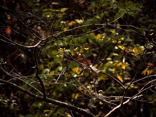 Foto profissional grátis de árvore, close, filiais, folhas secas