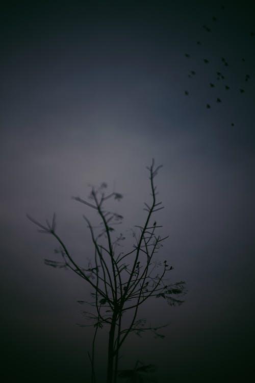 Foto d'estoc gratuïta de d'humor variable, darktone, minimalisme, to pàl·lid