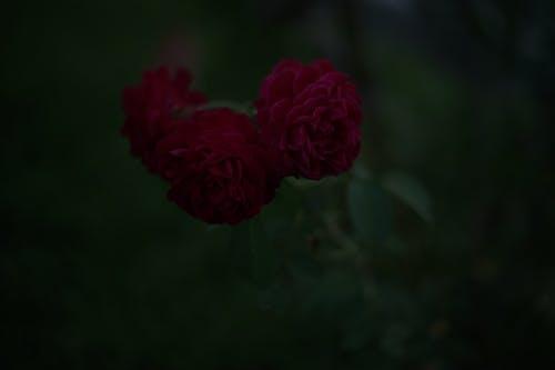 Free stock photo of darktone, flower power, minimalism