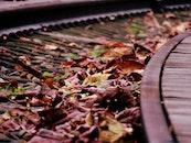 dry, blur, leaves