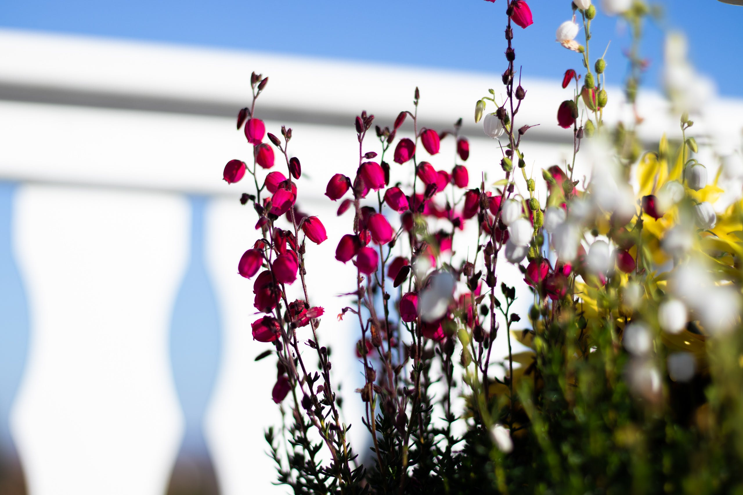 Free stock photo of balcony, beautiful flowers, blue sky, buds