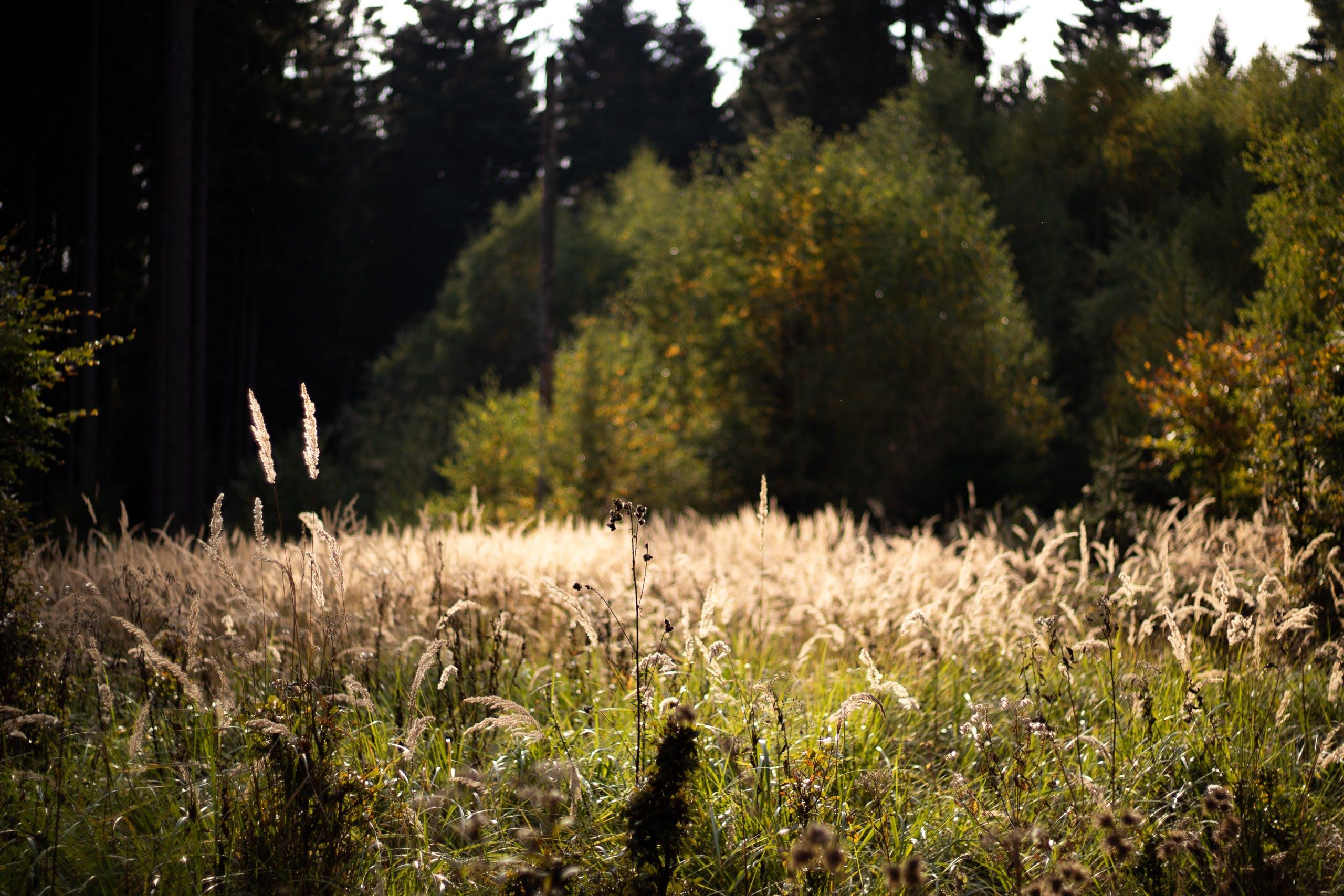 Free stock photo of beige, countryside, dark green, field